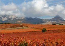 La Rioja Alavesa ( 130 km )